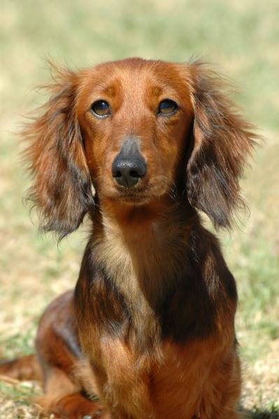 Canine Veterinary Dental Care